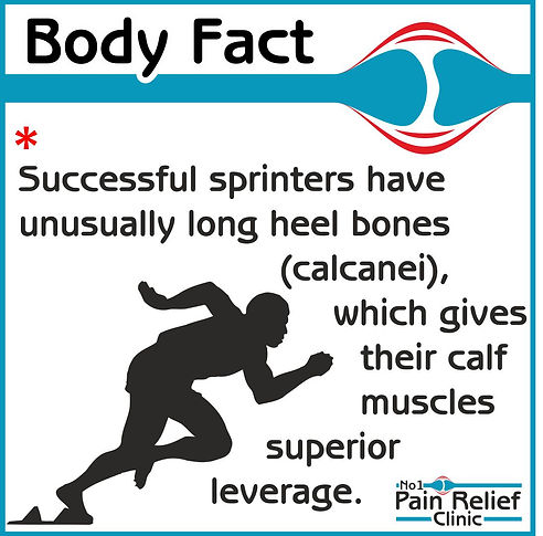 Body fact - sprinters unusually long heel bones