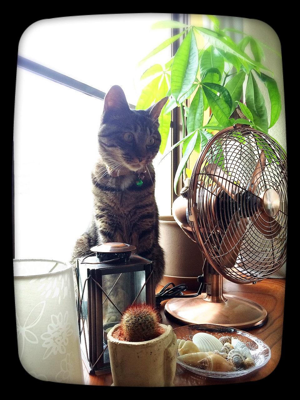 猫/去勢手術(男の子)