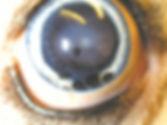 目 ガン 腫瘍