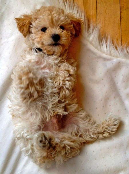 犬/去勢手術(男の子)体重10kg以下