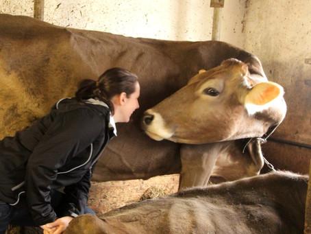 Onze boerenyoghurt en hangop van Buurvrouw Durkje