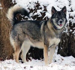 !Wolfie.jpg