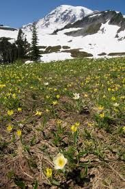 Montana spring.jpg