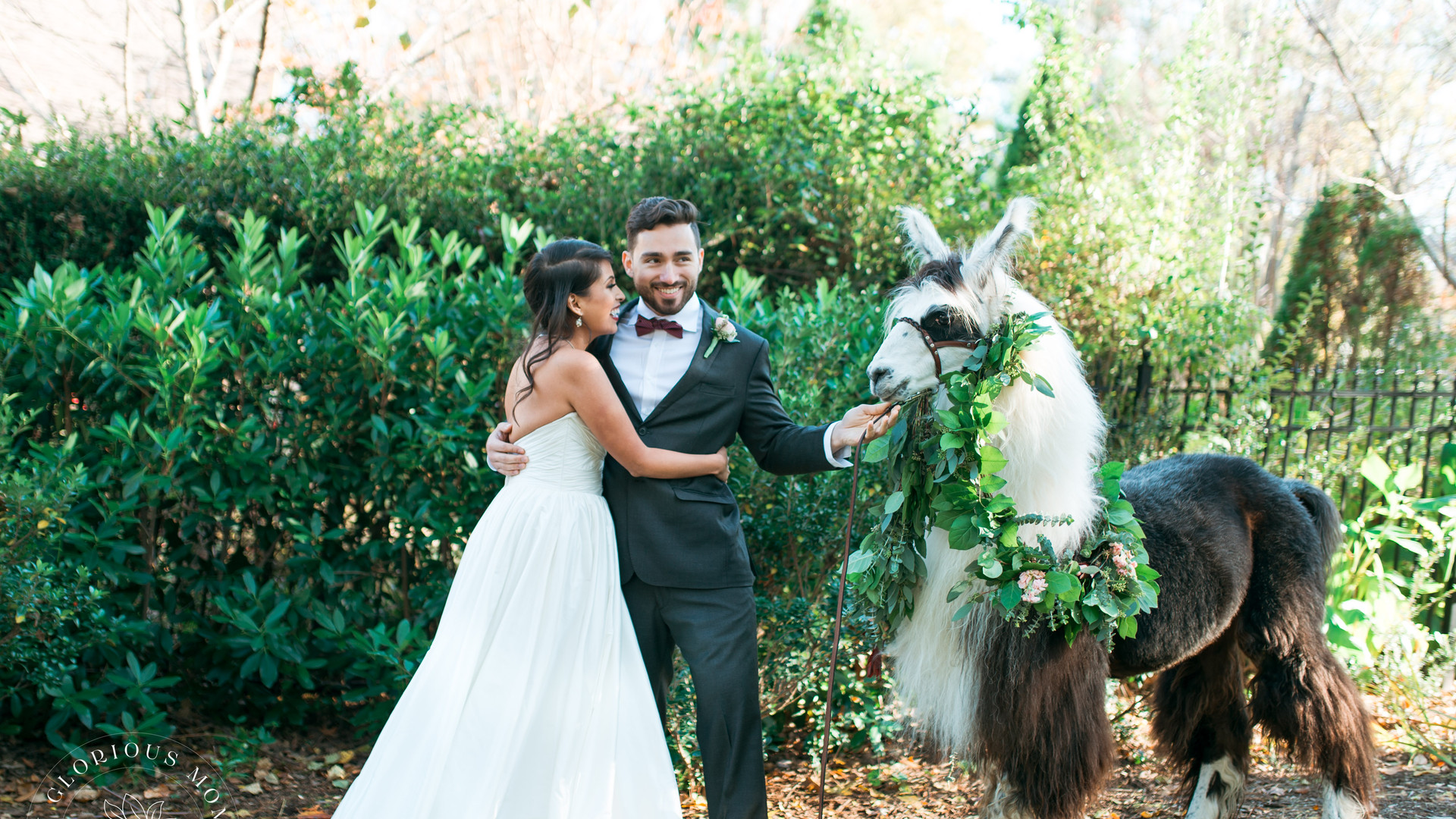 llama wedding in decatur georgia