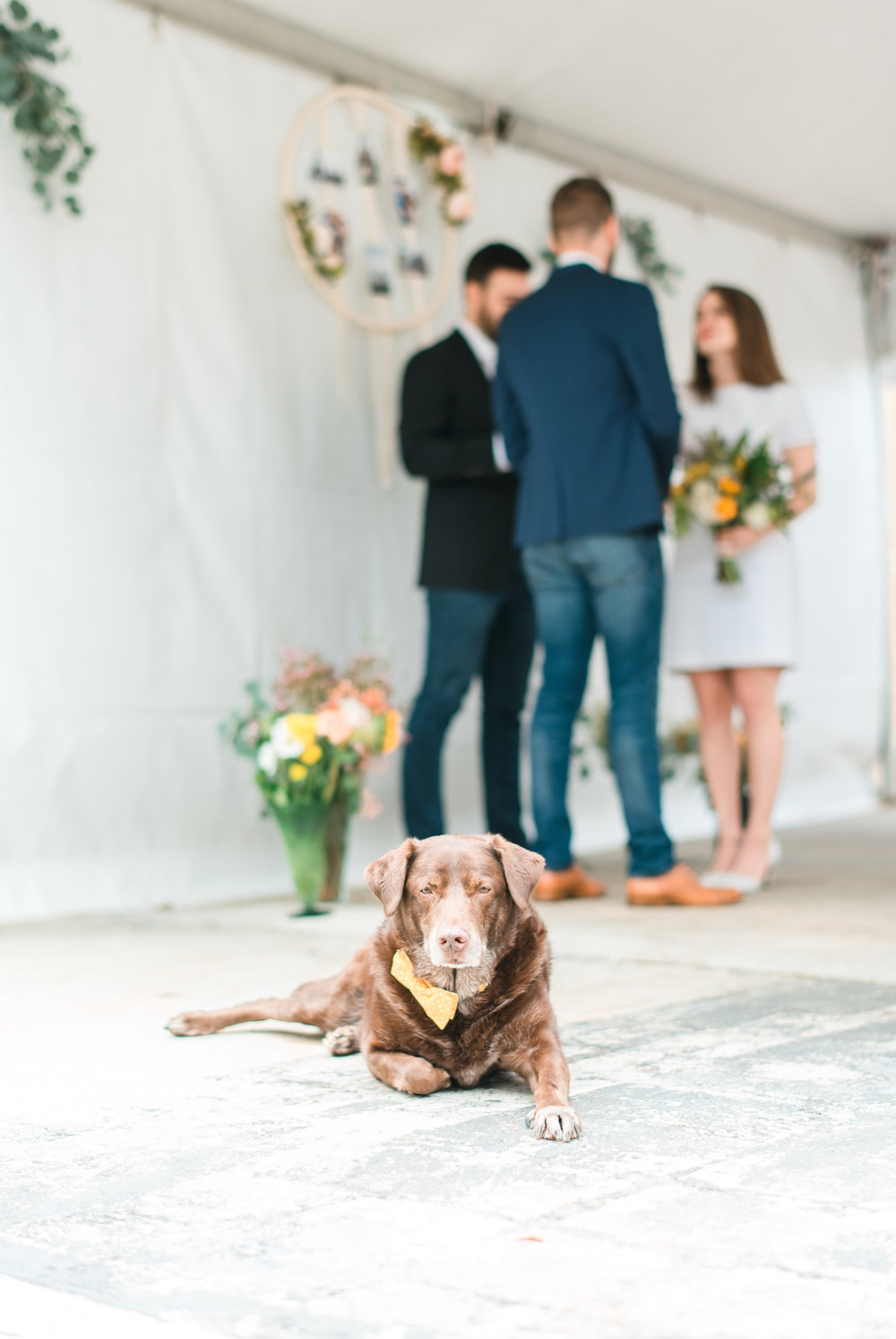 a puppy wearing a yellow bowtie in a wedding