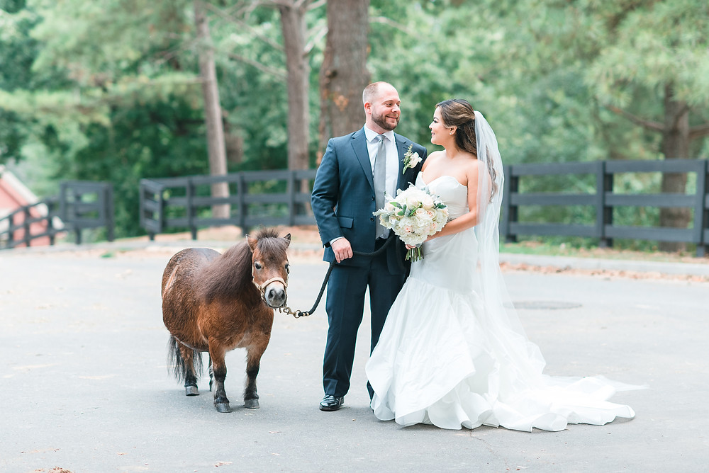 a bride and groom laughing together with a mini horse at chastain park wedding