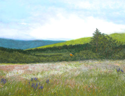Margaree Valley