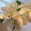 Individual Flower Essence