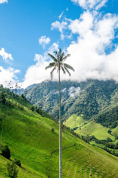 Cocora Valley, Colombia. Christian Holzi