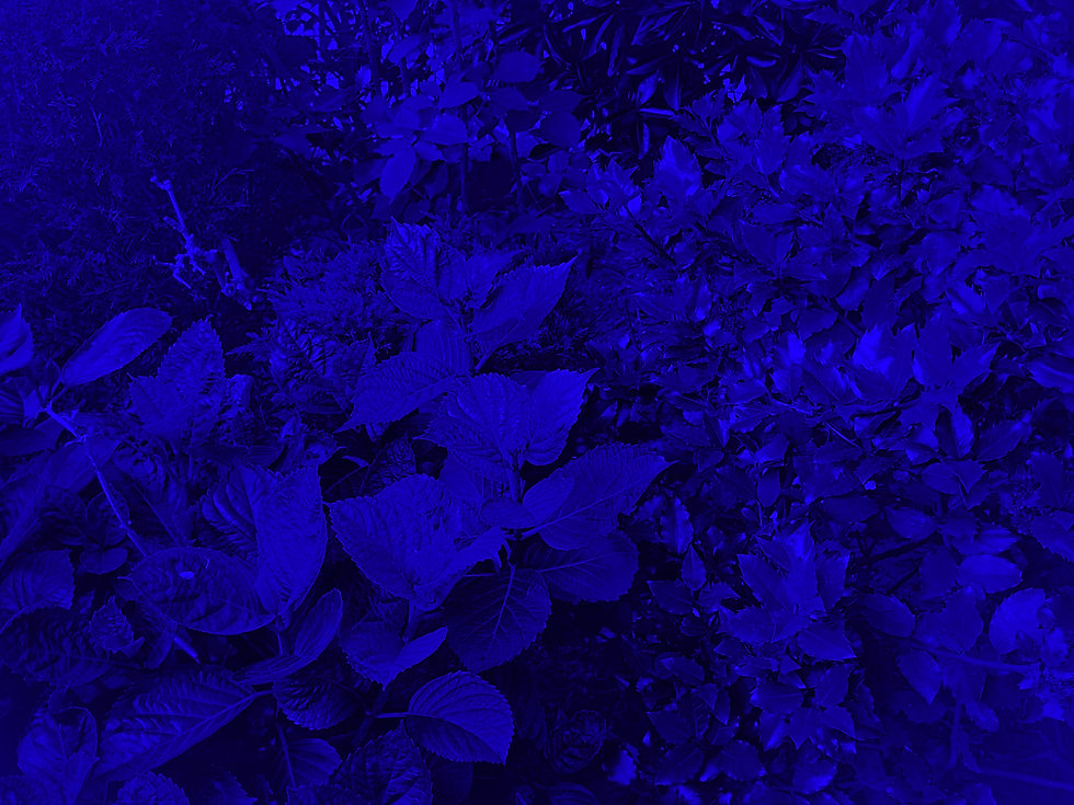 IMG_3746_edited_edited.jpg