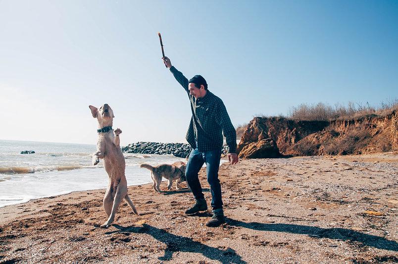 man walking with siberian huskies and la