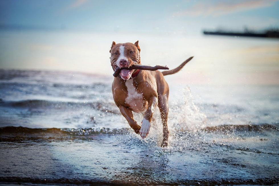 the dog in the water, swim, splash.jpg