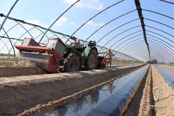 Vorbereitung zur Erdbeerpflanzung