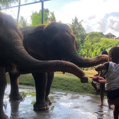 Bali Zoo; Elephant Mud Fun