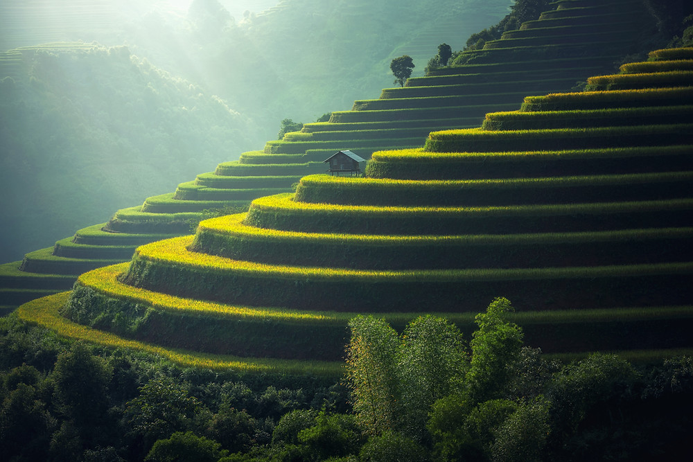 A terraced landscape