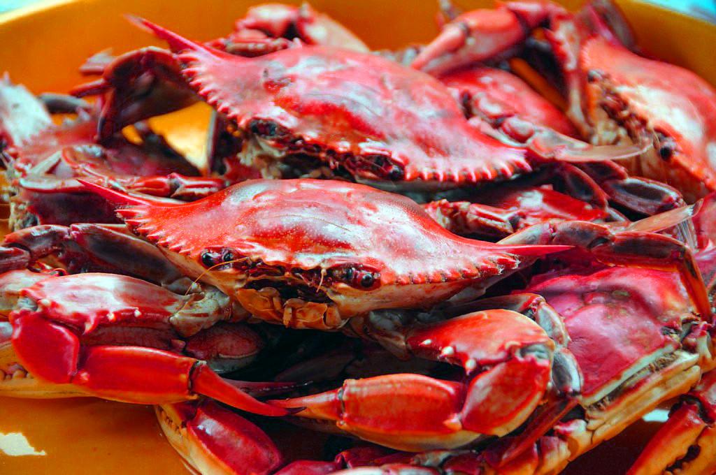 Blue Crabs New.jpg