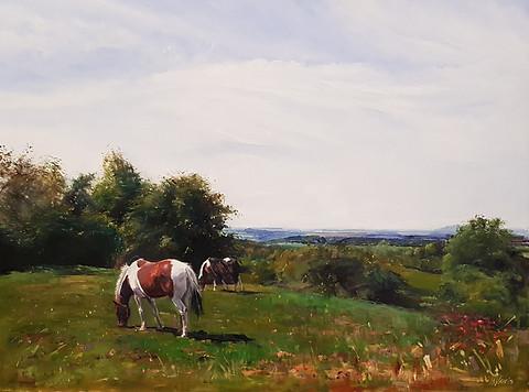 New pastures Clent Hills