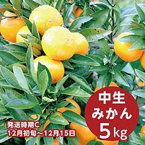 c_ishidi_5.jpg