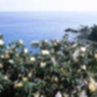 biwatane03_01.jpg