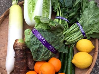 野菜セット&デコポン注文開始です!