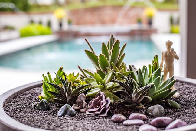 container succulent arrangement
