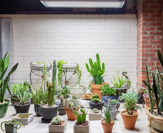 a basement-turned-greenhouse
