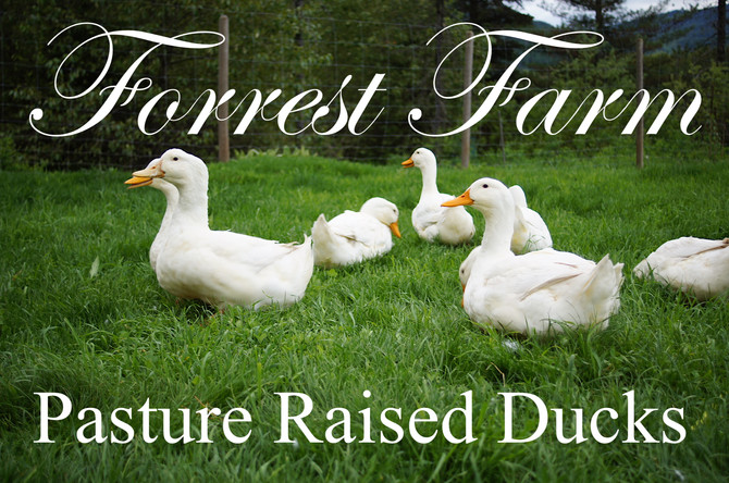 Pasture Raised Forrest Farm Duck