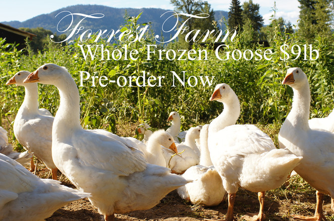 Pre Order your Goose Now