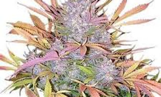 FEMINISED: Strawberry Cough (5 pack)