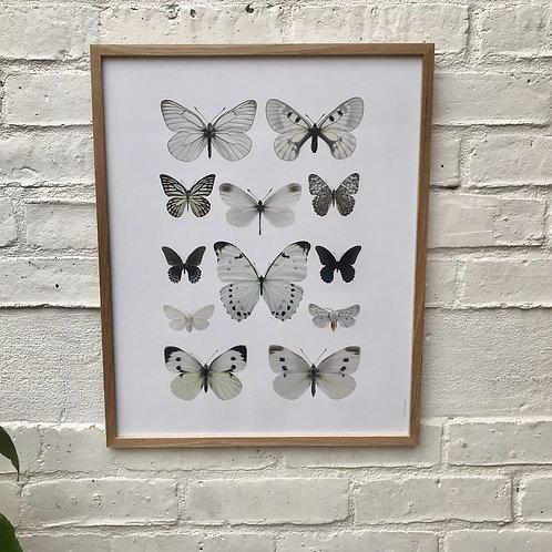 Butterfly Framed Photo Print Oak Frame #522