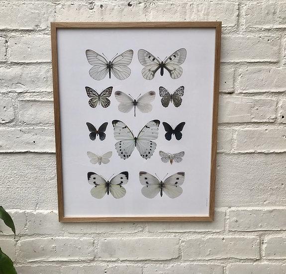 Butterfly Framed Photo Print Oak Frame front
