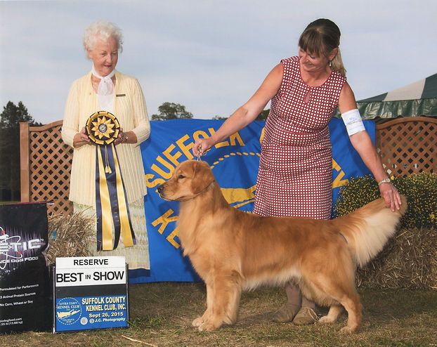 Golden Retriever Breeders