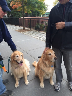 Broadway Golden Retrievers