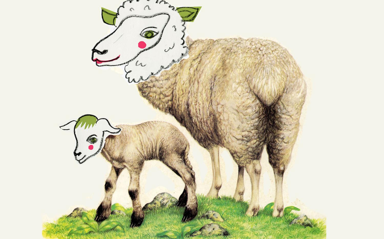 כבשים. מתוך פרויקט לתיאטרון הקרון