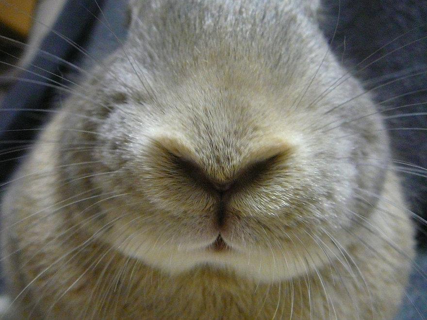 Tanner nose.JPG
