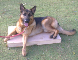 dog training basic and puppy first class 016.JPG