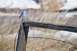 bird on fence in winter