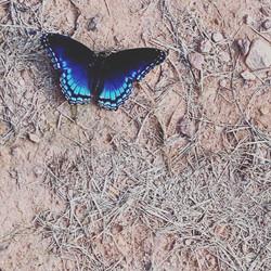 a delicate visitor