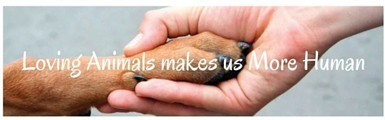 Loving Animals makes us More Human