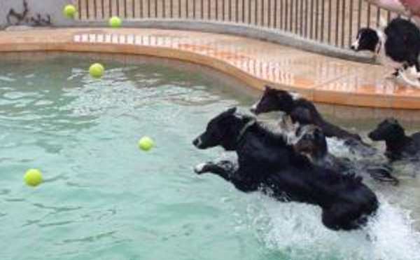 dogs-pool-ball-toss