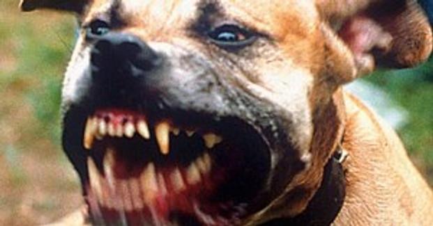 Most-Aggressive-Dogs-621x325