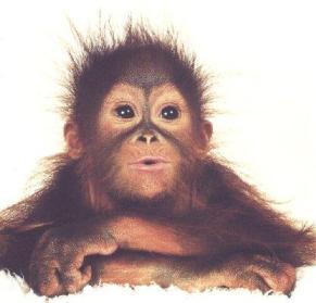 monkey full face