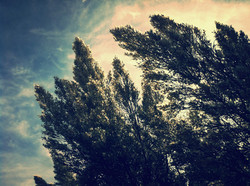 midday trees