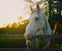 horse posing for film camera