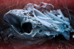 film photography, skulls