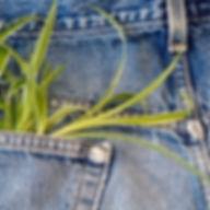 eco-friendly-clothing.shtml.jpg