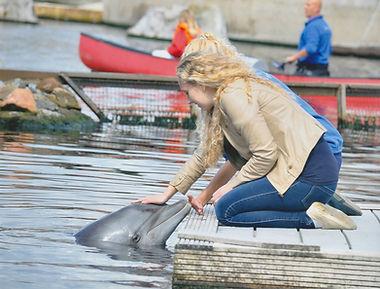 Дельфинарий в Хардервейк