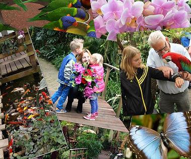 Парк Орхидей в Голландии