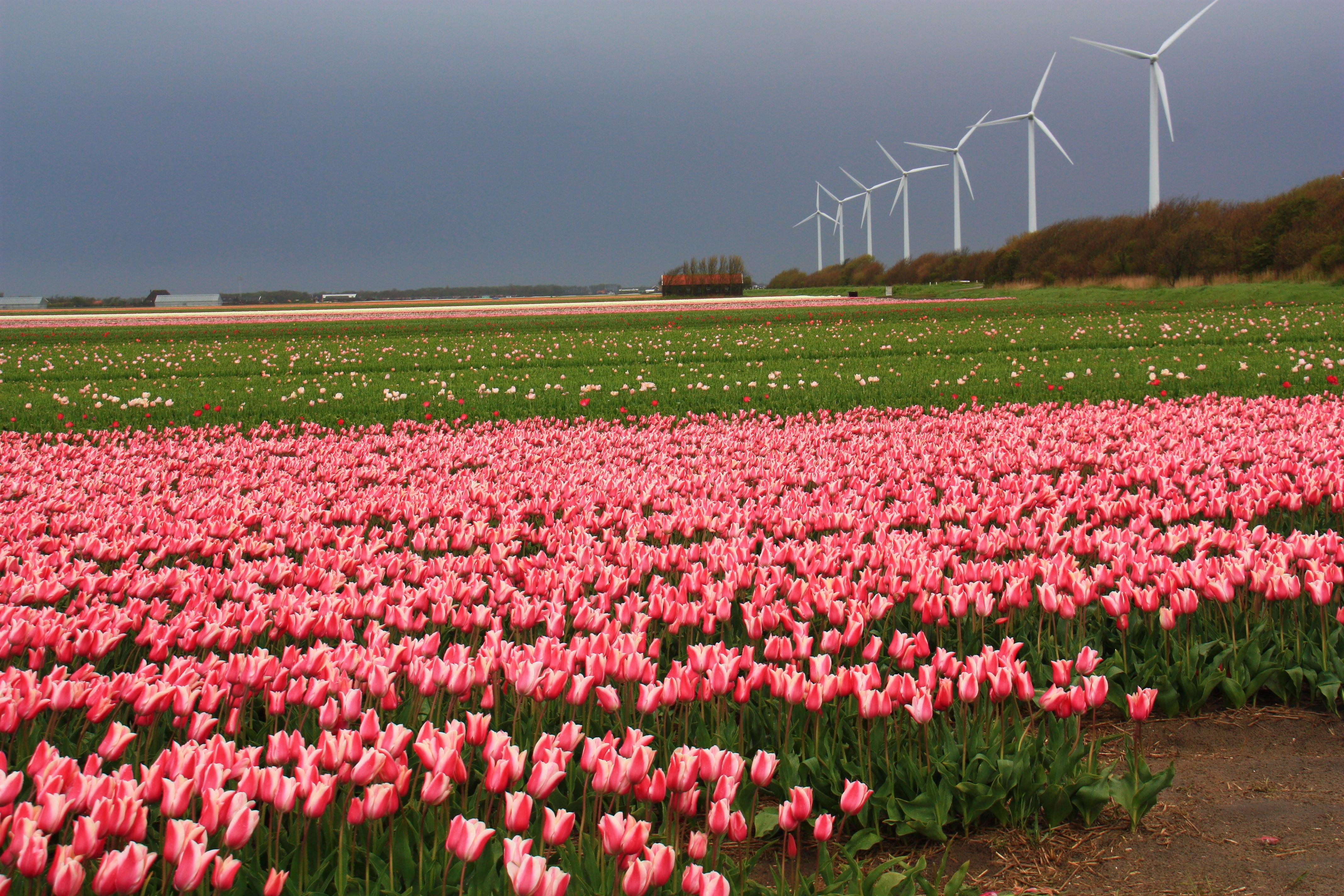 Весенний голландский пейзаж