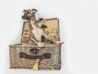 Neue Millriver's Zuchthunde
